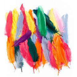 Feathers, L: 12-15 cm, asstd colours, duck, 350asstd.